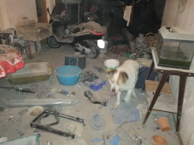"""Cane """"detenuto in luogo non idoneo tra sporcizia e materiali ferrosi"""", una denuncia"""