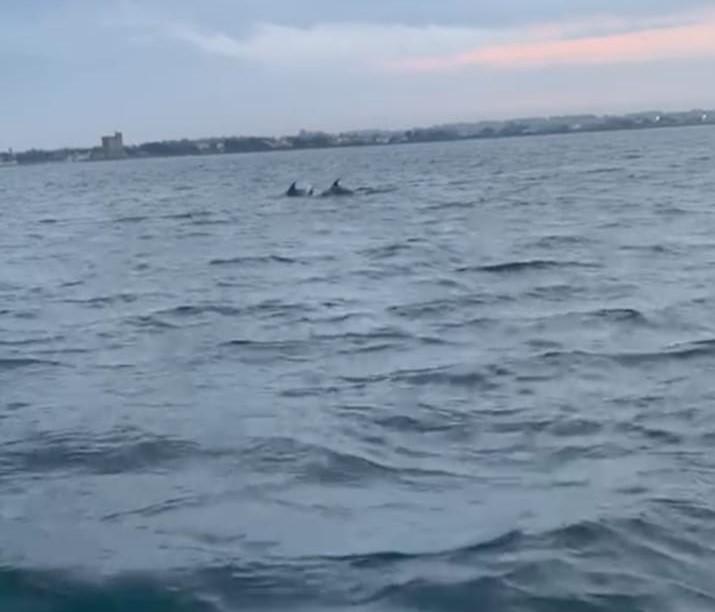 [video] – Il nuoto dei delfini a Porto Cesareo