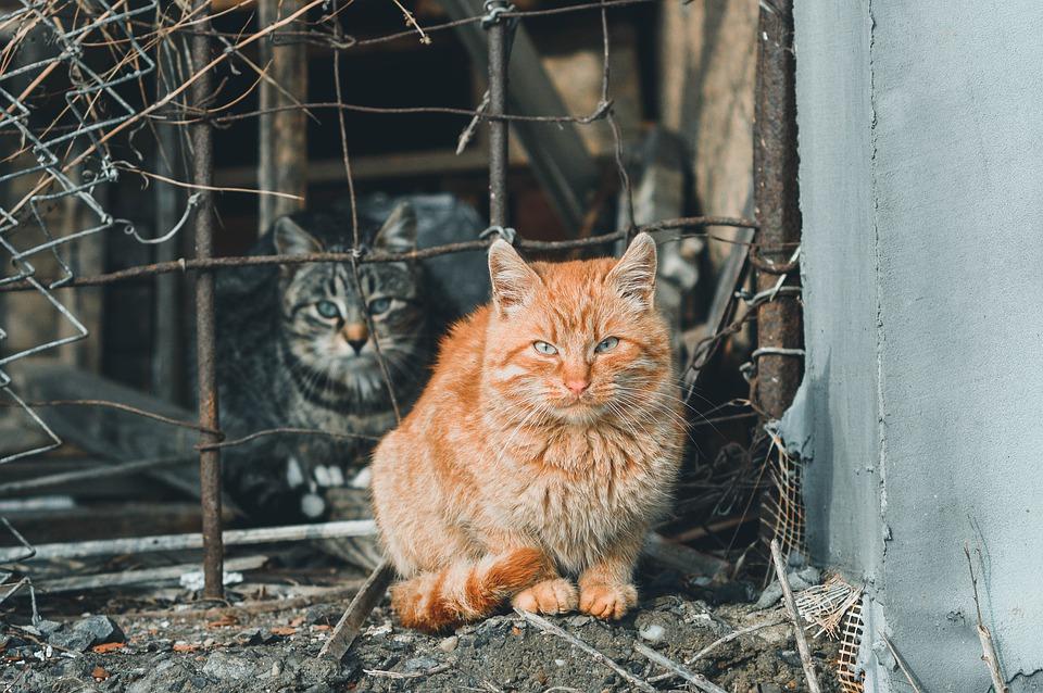 Vuol comprare cibo per gatti ma il denaro non basta, i carabinieri intervengono e saldano il conto
