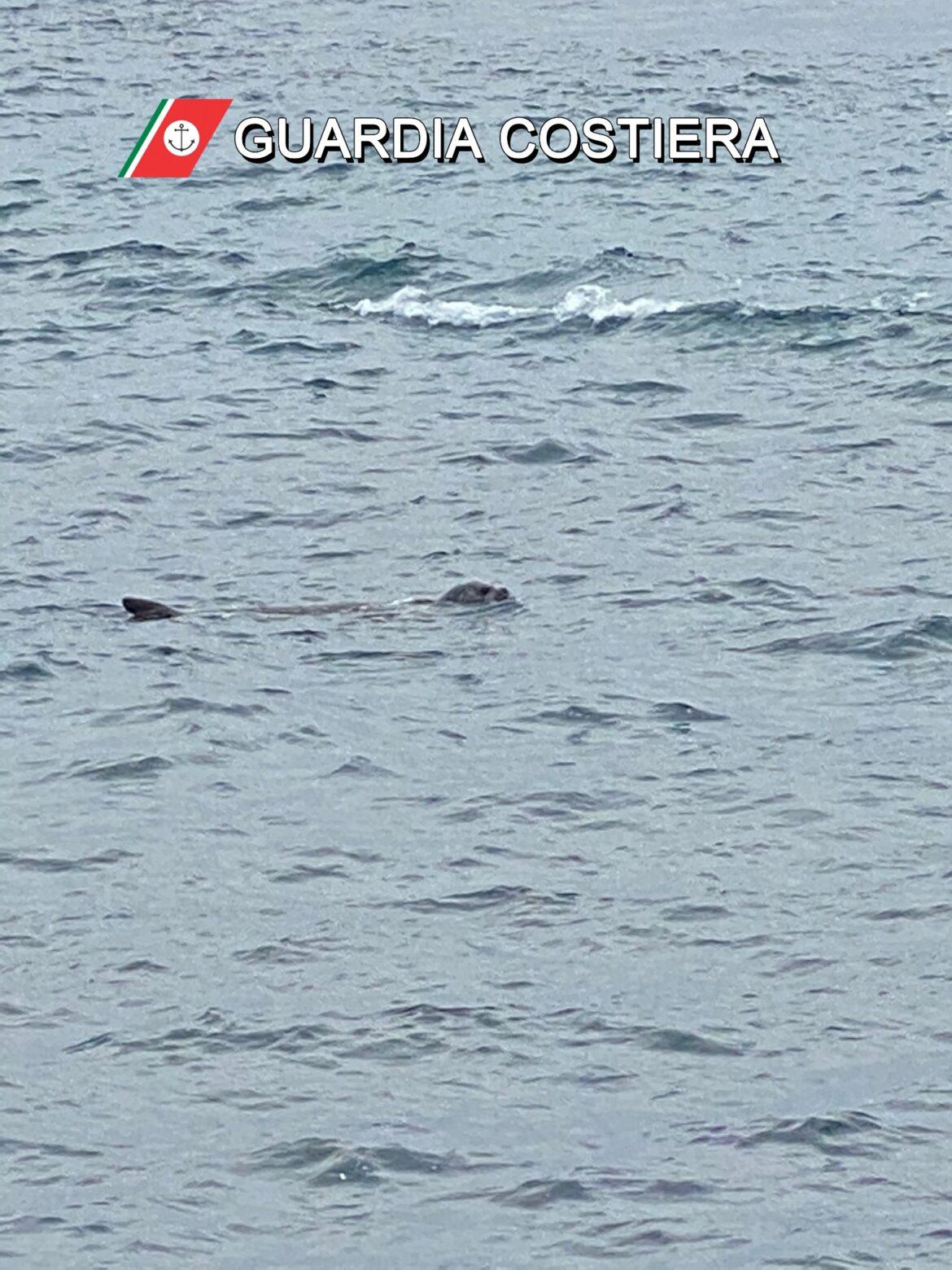 Un esemplare di foca monaca al Seno del Canneto (Gallipoli). Le linee guida sui corretti comportamenti