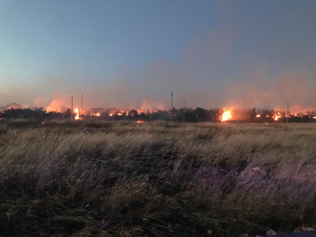 Ulivi a fuoco in località Giudice Giorgio: fiamme lambiscono la carreggiata
