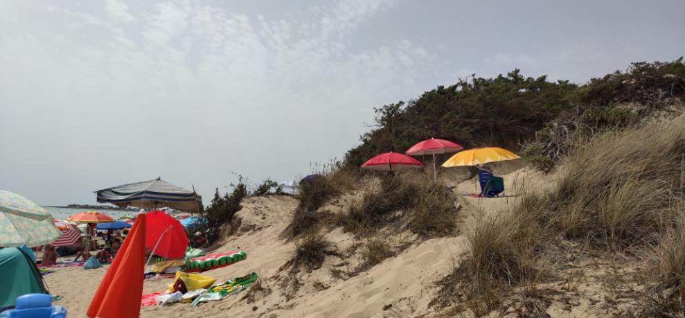 """Dune """"sotto assedio"""", l'associazione Lido Degli Angeli denuncia la mancanza di salvaguardia del patrimonio naturalistico"""